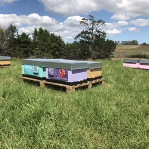 Managed Beehives